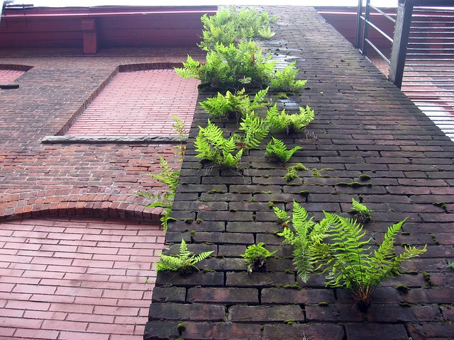 Ferns growing on brick smokestack
