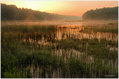 morning fog sunrise marsh daybreak muskegon muskratlake stacyniedzwiecki stacycossolini puremichigan