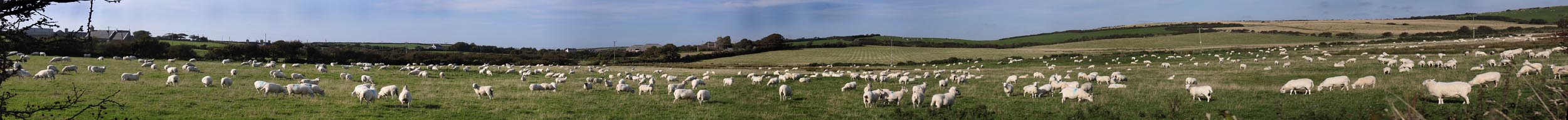 Sheep,panorama,Wales,farm,field,Anglesey,UK,mint,source,sauce,hotpix,tonysmith,tony,smith,hotpixuk,TDKTony,TDK,365days,Panoramique,int\u00e9ressant,join,joiner,stitch,stitcher,autostitch,auto,pano,imagen,panor\u00e1mica,image,panoramisches,Bild,hotpicks,hotpics,hot,pix,pics,stitched,joined,images,widescreen,wide,\u043f\u0430\u043d\u043e\u0440\u0430\u043c\u0430,\u30d1\u30ce\u30e9\u30de,\u5168\u666f,\ud55c\uad6d\uc5b4