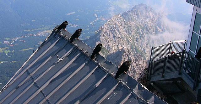 Germany, Zugspitze - Bergdohlen, schöne Aussichten   , 74186/5419