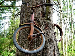 Don't Leave Your Bicycle Next to a Tree for Thirty Years | by sea turtle