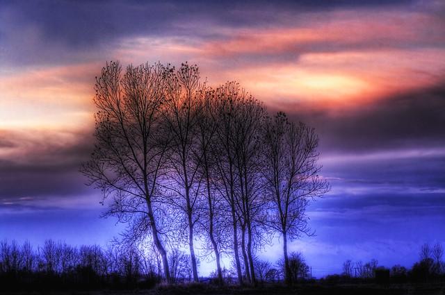 Trees and twilight