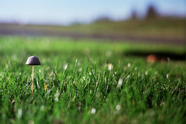 lone mushroom, lost film