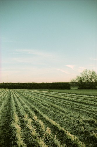 field and sky | by Stephen J Alexander