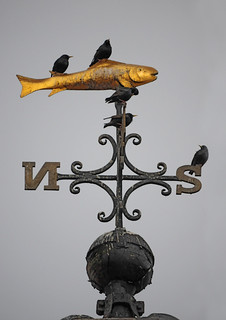 Starlings on a Golden Fish Weather Vane, Whitby Clock Tower | by Steve Greaves