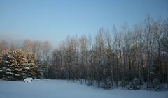 Backyard Sun Peek