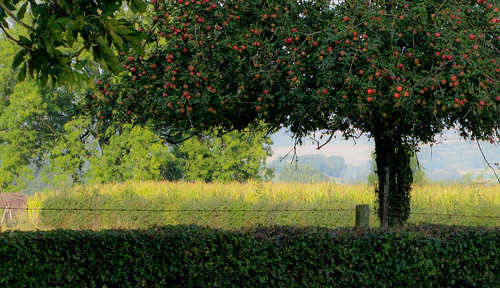 appletree | by glasseyes view