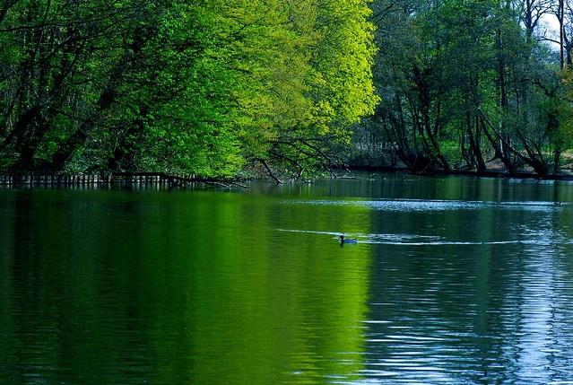 Nature in spring (Bois de Vincennes, Paris)