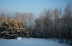 Backyard Morning Light