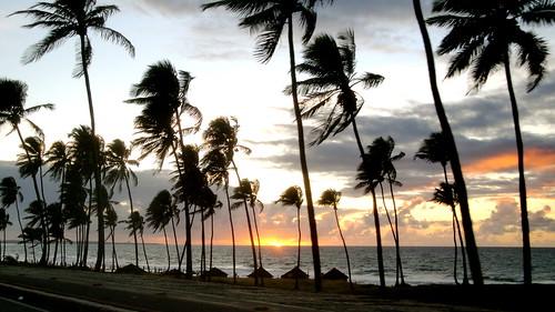 trees sea brazil sun tree sol praia beach brasil sunrise mar palm bahia salvador nascer coqueiros pituba