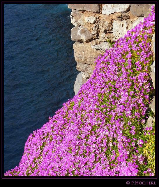 Wallflowers - Mauerblümchen