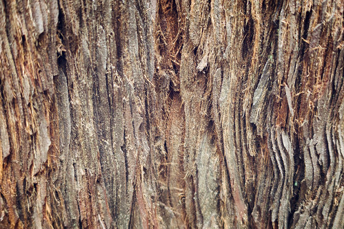 Redwood Bark Closeup | by Eric Kilby