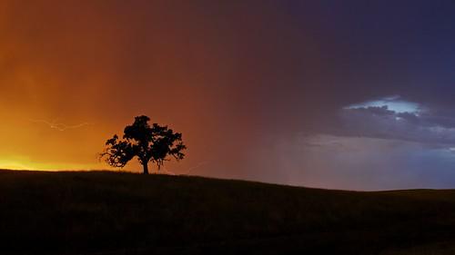 california lighting sky storm tree colors silhouette landscape oak folsom thunderstorm sacramento prairie ernogy oaklightning