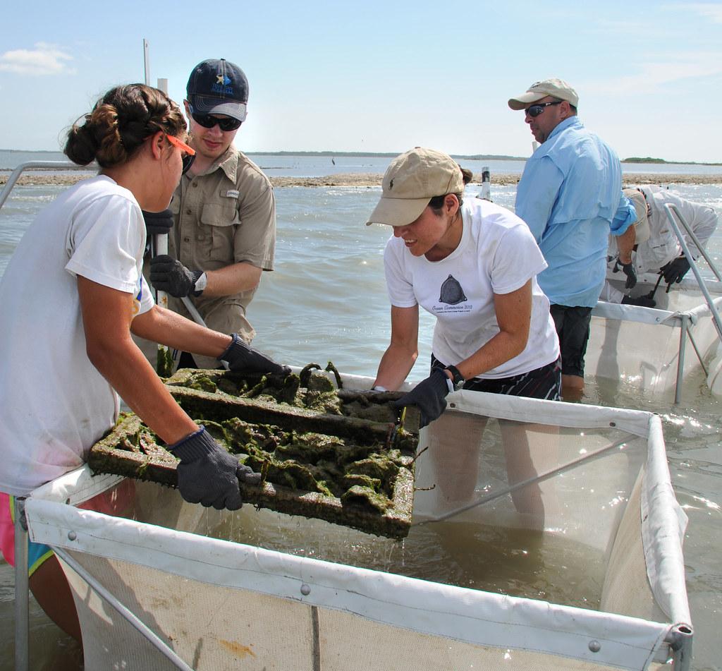 Marine biologyLee Smee Field Trip #2