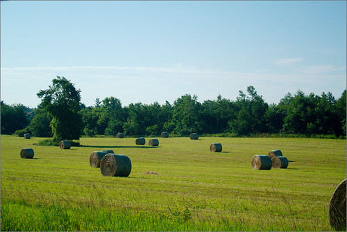 field raw michigan farm hay bales • joeldinda sunfield 1v1