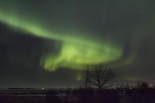 Auroral Vortex