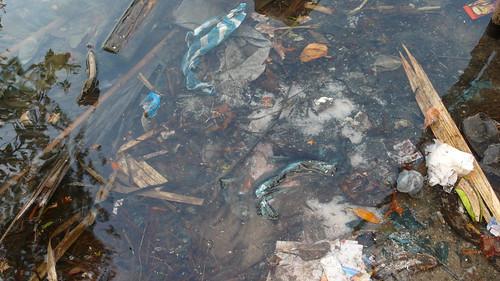 el manglar, la bolsa de plastico... | by °°°paula°°°