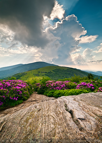 roan janebald rhododendron wnc blueridgeparkway westernnorthcarolina roanmountain roanhighlands bloom flowers epic vista scenic landscape appalachian appalachiantrail daveallen d700 nikon 1735mm blueridgemountains carolina northcarolina outdoors nature daveallenphotography mountains gneiss rock rays beams sunrays lightrays nc mountain highlands blueridge mygearandmediamond tn tennessee