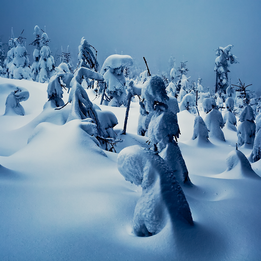 Winter Fairy Tales II by Svein Skjåk Nordrum