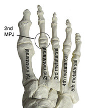 Foot Bones 2nd Mpj Labeled 1st 2nd 3rd 4th And 5th Me Flickr