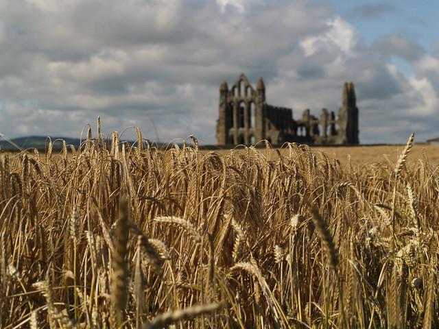 abbey wheat