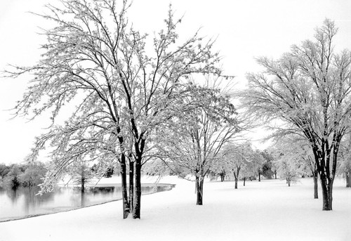 blackandwhite snow film analog landscapes texas 35mmfilm scanned digitized shotonfilm