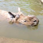 多摩動物園 021