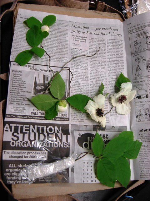 pressing a plant specimen II