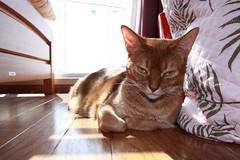 Cat | by amenohi