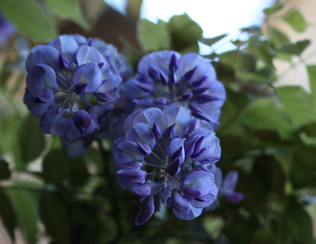 Un pò di Blu