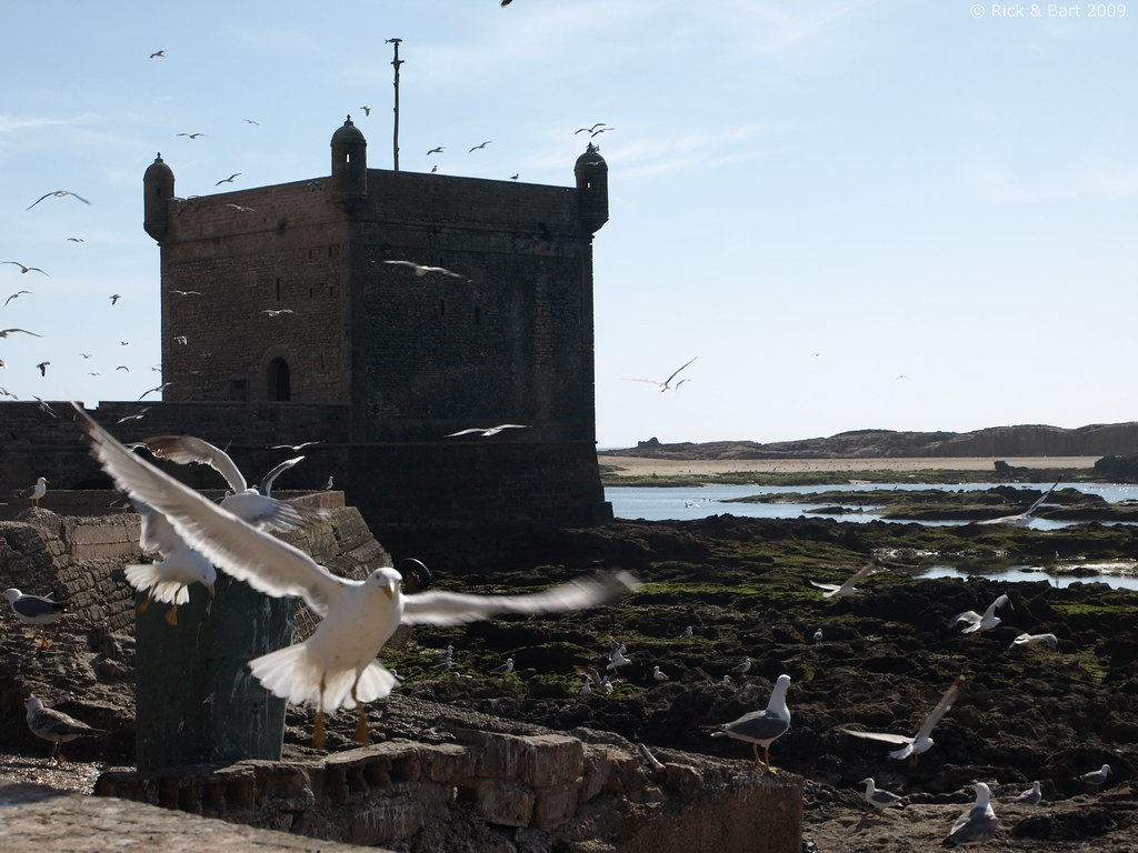 Seagulls @ Essaouira / الصويرة | Essaouira is protected by a