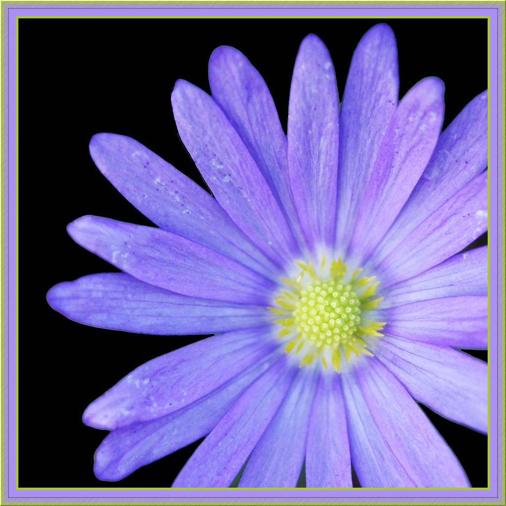 Draw Me A Purple Flower Explore Interestingness The Blue Flickr