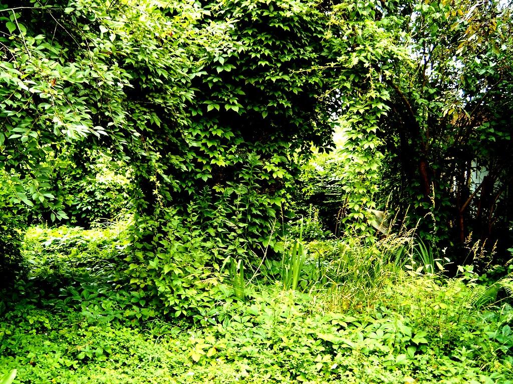 Völlig Verwilderter Garten Neben Dem Von Meiner Oma Do Flickr