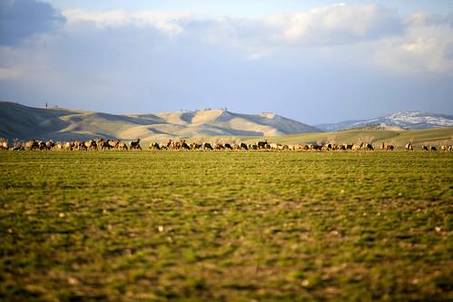 Elk Party | by road triper