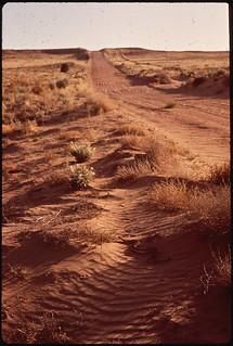 Rattlesnake on the Sand Dunes of the Rio Grande Valley near Albuquerque, New Mexico ..., 06/1972