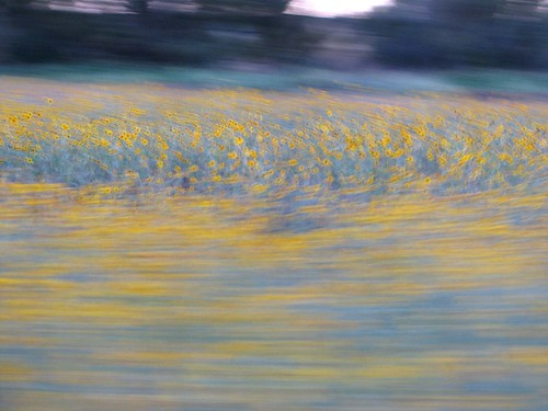 sunflowers so fast | by sheri | today is pretty