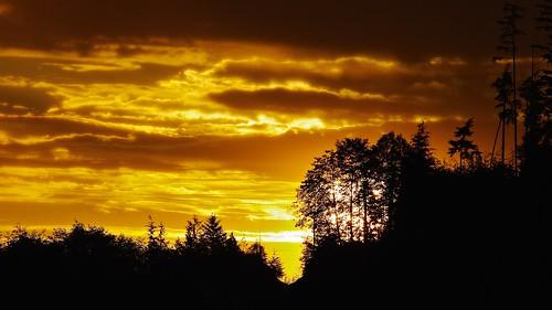 porthardy britishcolumbia canada pentax jasbond007 nigeldawson copyrightnigeldawson2015 landscape sun sunrise dawn cloud plant tree k20d smcpentaxda★300mmf4edifsdm