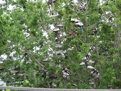 Shoe Tree - Washington Bridge