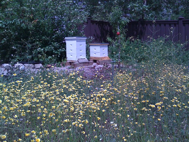 Hives and wildflowers