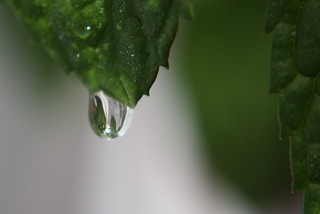 drops   by marfis75