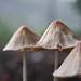 Mushrooms & Fungi 2009-2010