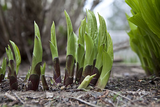 New Growth - May 2 | by Derek Dysart