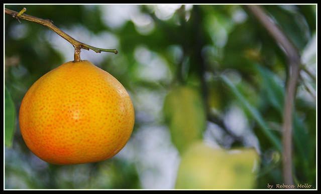 Sweet tangerine ...  Do you want ?It's for you...