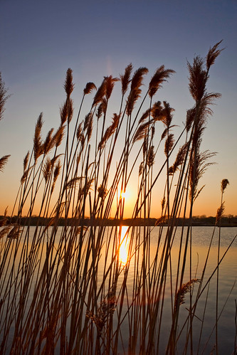 sunset sun lake reed nature forest wow spring day grove dusk clear forestpreserve independence preserve independencegrove