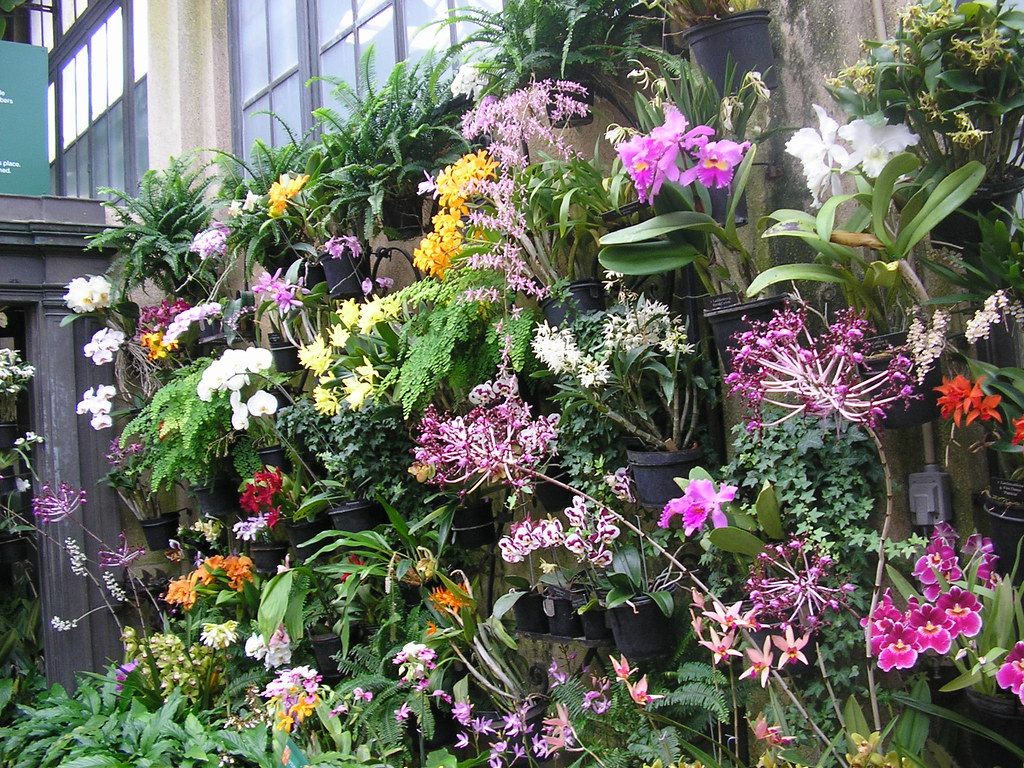 A staggering number of orchids | ocimumbasilicum | Flickr