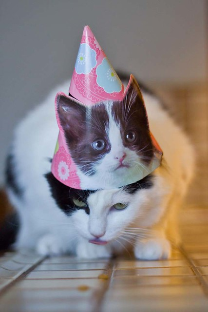 Two-headed kitty  (silly birthday outtake)