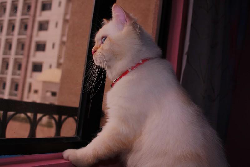 canon cat flickr