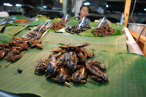 Fried Giant Water Bug Lethocerus indicus - Chiang Mai Night Bazaar THB5 each | by avlxyz