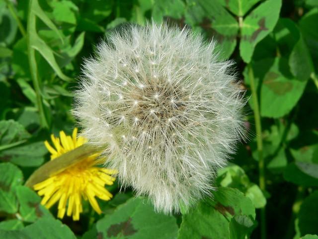 Primavera a Viesca (Reggello)