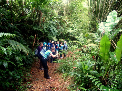 Oldest protected area of rainforest in the western hemisphere